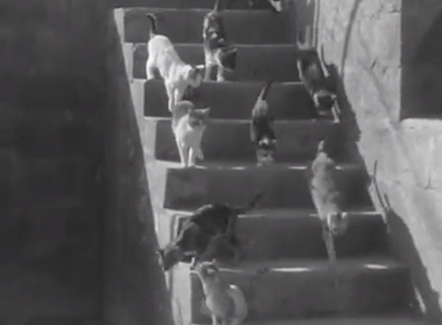 Stray Cat Village Off Naples cats coming down stairway
