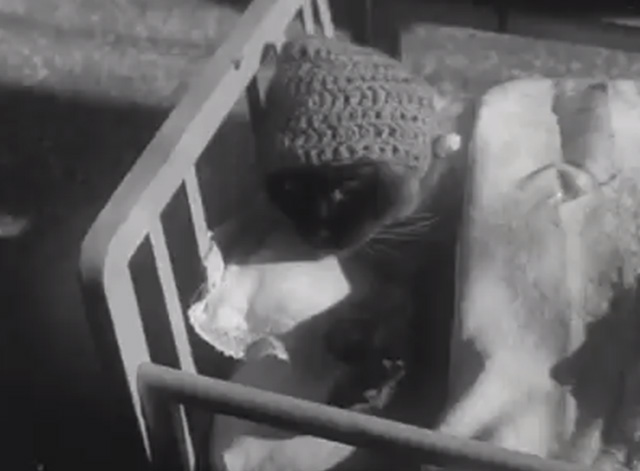 Stray Cat Village Off Naples Siamese cat with knit bonnet lying in crib