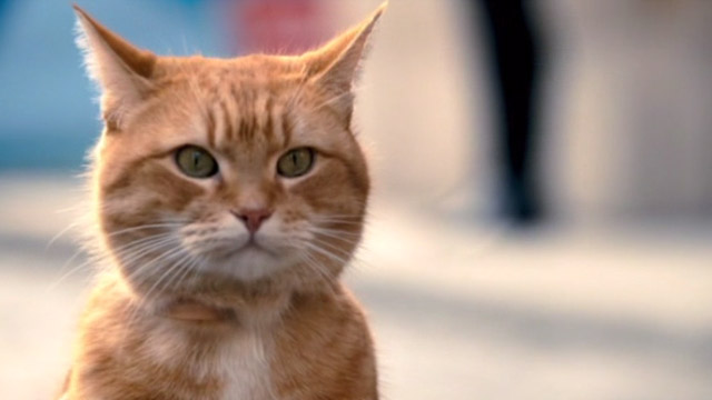 A Street Cat Named Bob - orange tabby Bob