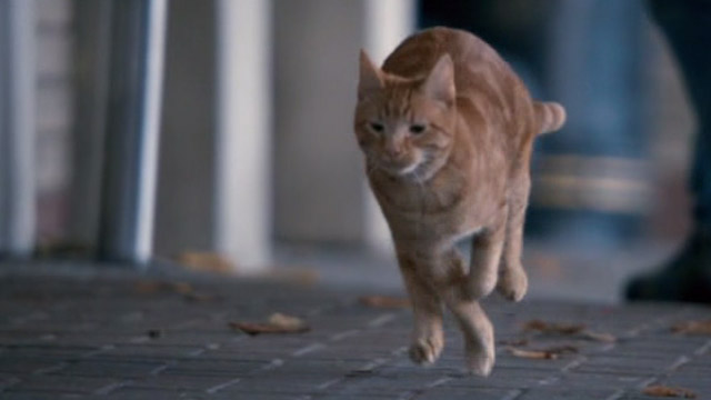A Street Cat Named Bob - orange tabby Bob running down sidewalk