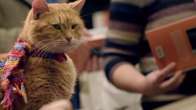 A Street Cat Named Bob - orange tabby Bob at book signing