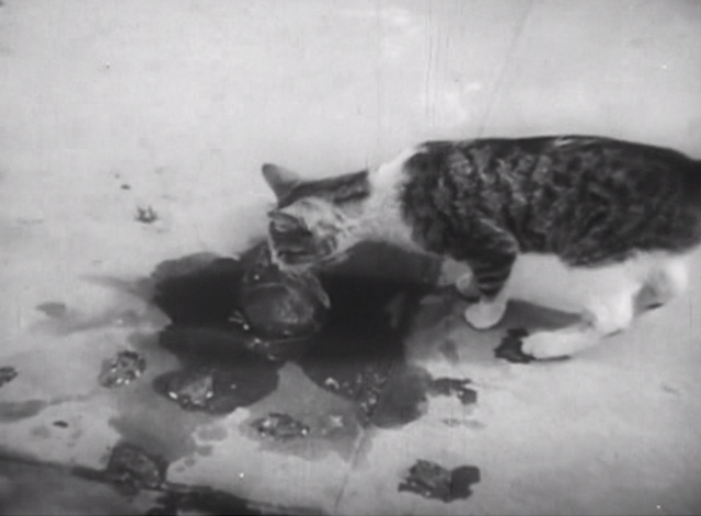Street Scene - tabby and white cat sniffing at ice on sidewalk