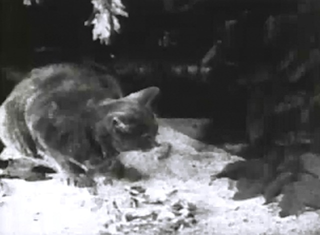 Struggle for Existence - grey cat crouching on the ground by feathers
