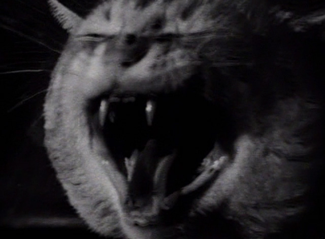 Sudden Fear - close up of tabby cat screeching