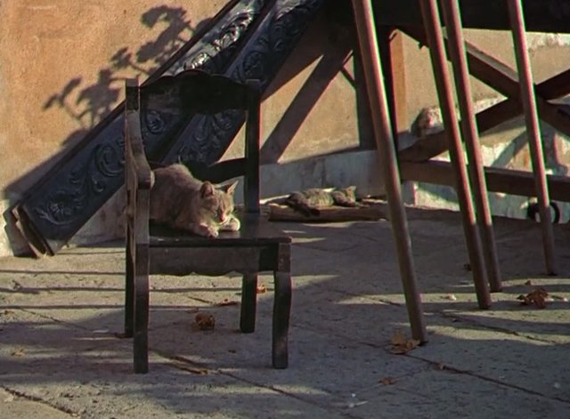 Summertime - two tabby cats sleeping on and by chairs in sun