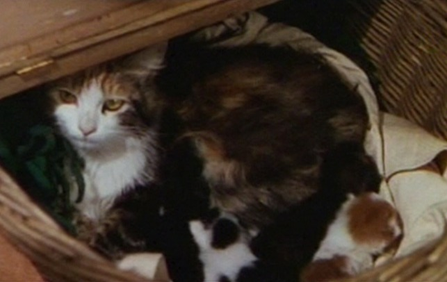 Sweethearts - mama cat in basket with kittens
