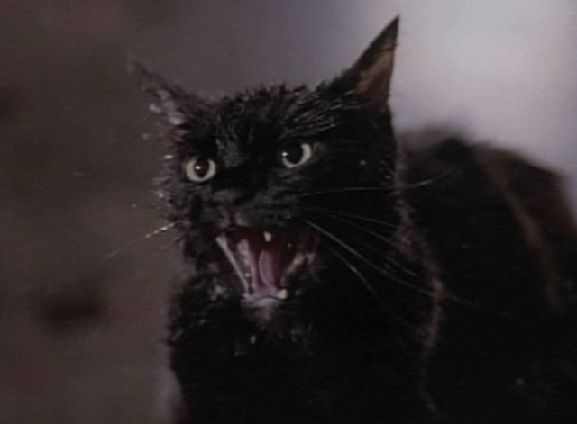 Tales from the Darkside - Cat scream