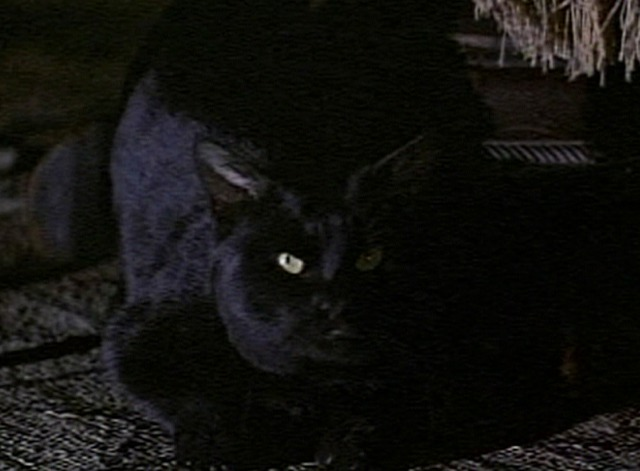 Tales of Terror - The Black Cat