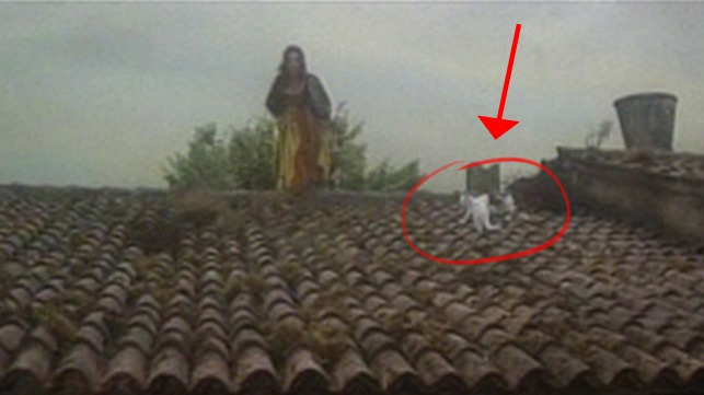 The Taming of the Shrew - Katharine Elizabeth Taylor on rooftop with cats