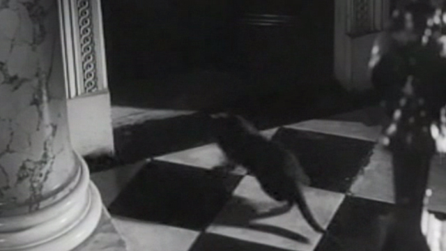 Ten Little Indians - gray cat running across floor