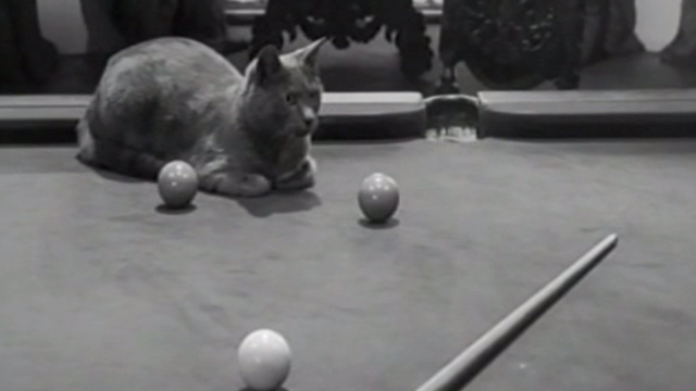 Ten Little Indians - gray cat sitting on pool table
