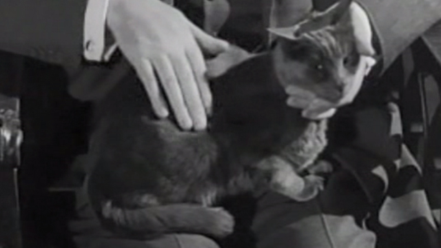 Ten Little Indians - gray cat sitting on lap and being petted