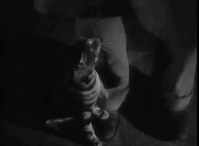 They Drive By Night - Bengal tabby cat at man's feet looking up