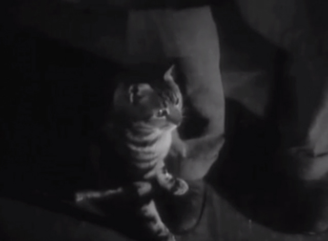 They Drive By Night - Bengal tabby cat at man's feet