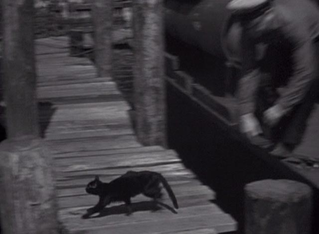They Were Expendable - black cat crosses dock