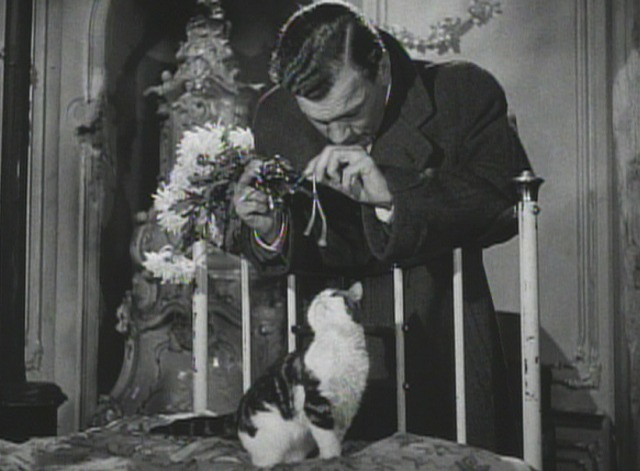 The Third Man kitten 1