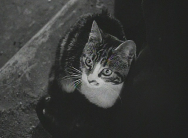 The Third Man kitten 3