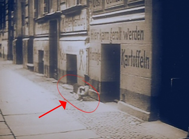 The Third Reich: The Rise and Fall - cat walking down German street after World War I