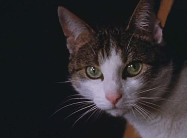 The Third Reich: The Rise and Fall - close up of cat's face