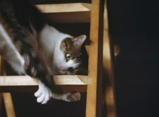 The Third Reich: The Rise and Fall - cat playing on ladder