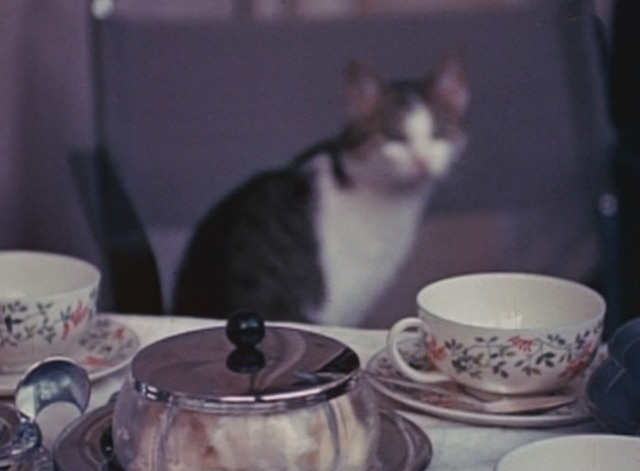 The Third Reich: The Rise and Fall - cat in background behind table