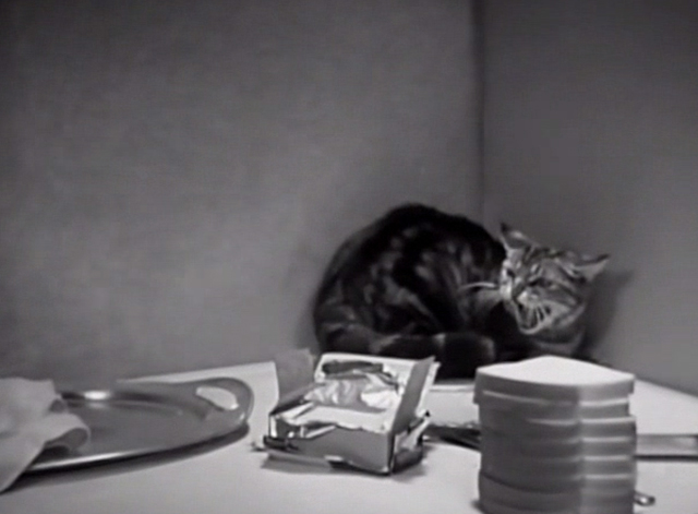 Three Chumps Ahead - tabby cat hissing on table with limburger cheese