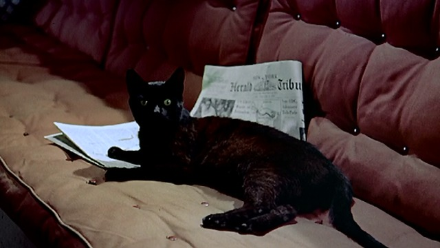 To Catch a Thief - black cat laying on newspaper across couch