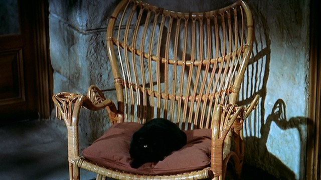 To Catch a Thief - black cat looking up from cushion on chair