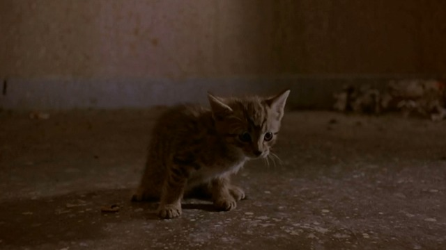 Trainspotting - tabby kitten in filthy room close