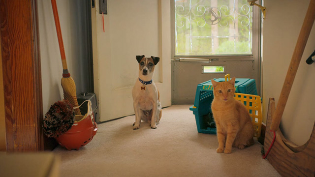 Treasure Hounds - Chauncey ginger tabby cat with dog Skipper