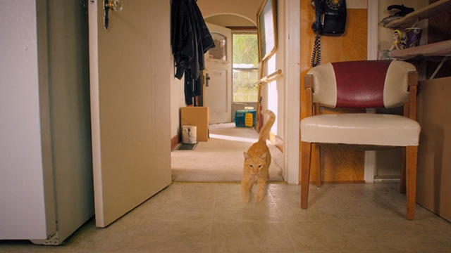 Treasure Hounds - Chauncey ginger tabby cat walking into kitchen