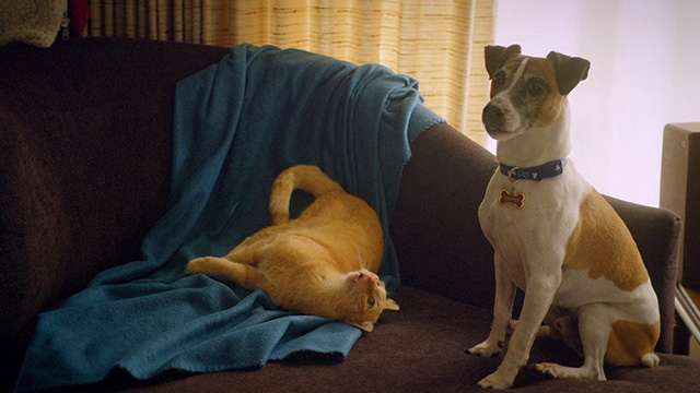 Treasure Hounds - Chauncey ginger tabby cat on couch with dog Skipper