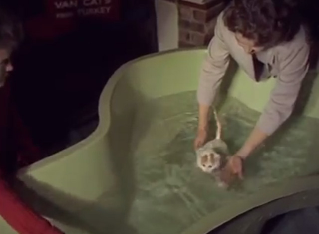 Turkish Van Cats Learn to Swim - Turkish Van Cat being made to swim in large tub