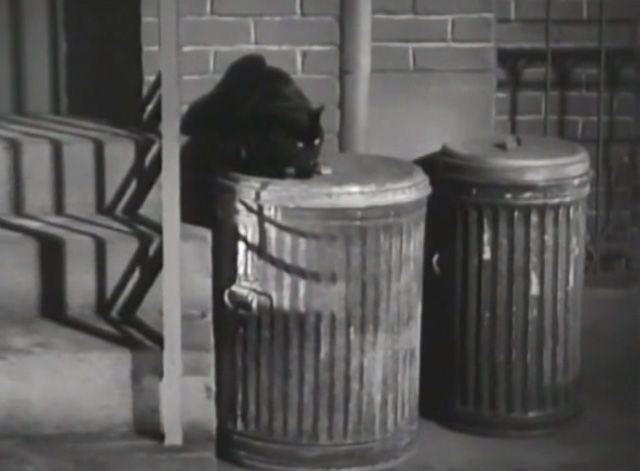 Twelve Crowded Hours - black cat on garbage can lid