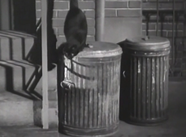 Twelve Crowded Hours - black cat about to jump down off garbage can lid