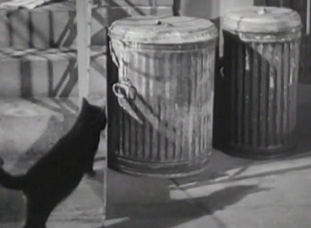 Twelve Crowded Hours - black cat approaching garbage can