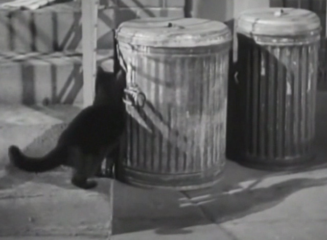 Twelve Crowded Hours - black cat about to jump up on garbage can lid