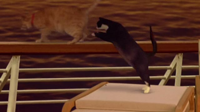 Undertaking Betty - tuxedo cat Fred and tabby Ginger walking jumping onto ship's railing