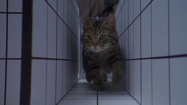 Unforgettable - tabby cat Zelda held up by Martha Linda Fiorentino