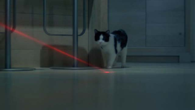 Unknown Caller - tuxedo cat Mr. Snuggles Oreo chasing red laser pointer
