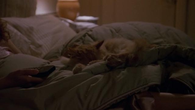 Unlawful Entry - orange long-haired tabby cat Tiny sleeping on bed