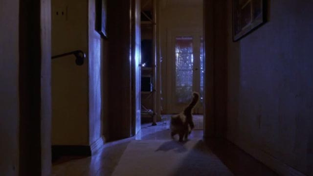 Unlawful Entry - orange long-haired tabby cat Tiny running from lightning