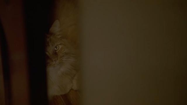 Unlawful Entry - orange long-haired tabby cat Tiny in closet