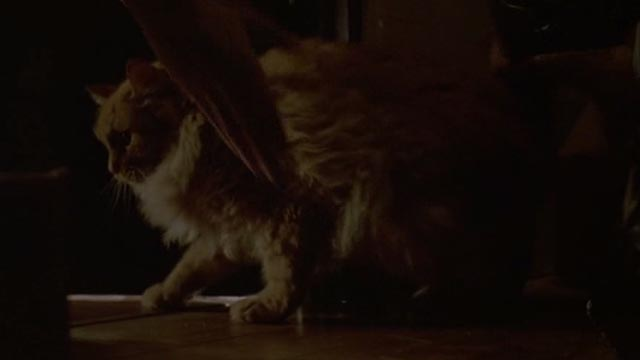 Unlawful Entry - Karen reaching for orange long-haired tabby cat Tiny in closet