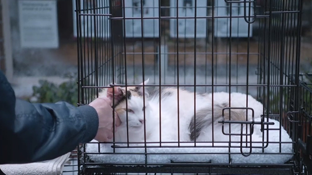 Unleashed - calico cat in cage