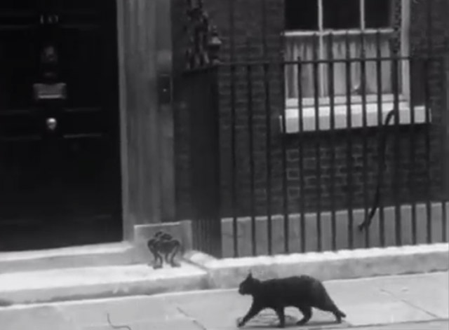 War Cabinet 1940 - black cat walking along sidewalk in front of 10 Downing Street, London