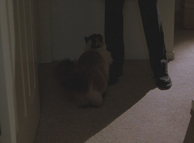 The Watcher - Himalayan cat Frank looks up at killer