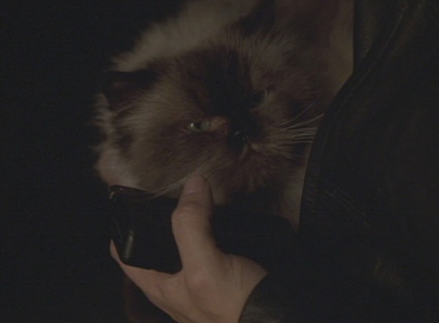 The Watcher - Himalayan cat Frank in killer's car