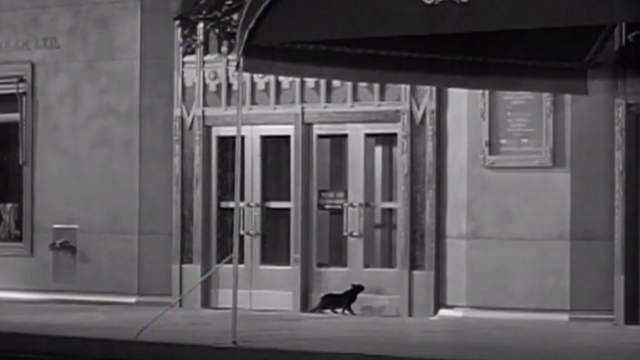 Weekend at the Waldorf - black cat trying to get into Waldorf-Astoria Hotel