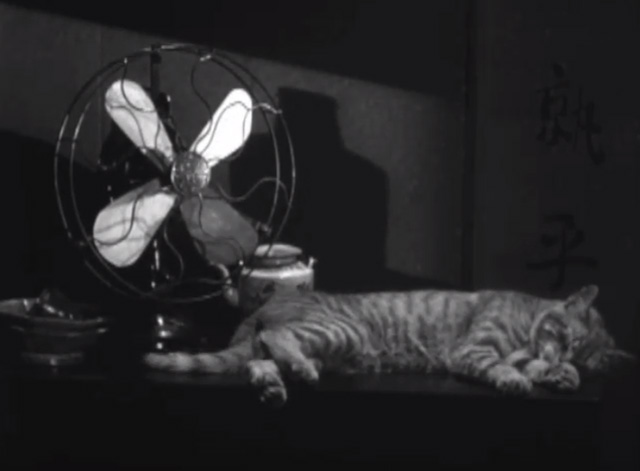 Welcome Danger - tabby cat sleeping by electric fan
